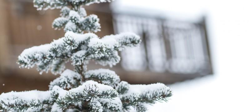Passer Noël à la montagne…