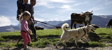 Cani-Rando, randonner avec un chien