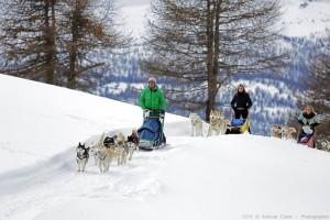 chiens de traineau sestriere