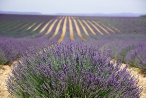 provence-725856_960_720